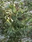 Ponto focal com orquídeas