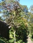 Condomínio Jardim Prudência - Plantio de árvores nativas