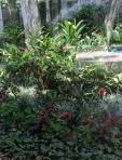 Consulado Jardins - Canteiro tropical