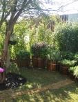 Fazenda Boa Vista - horta em tinas